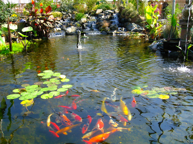 Beautiful koi fish pond images for Beautiful koi ponds